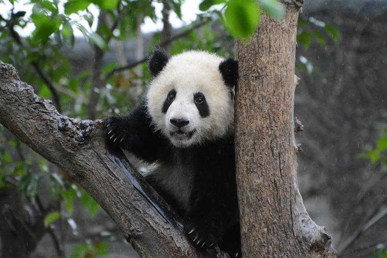 Photo from wildchina.com
